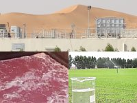 Al Ain Poultry, Slaughtering and Processing Plant